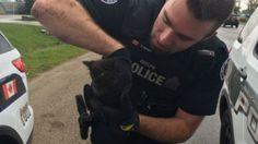 Guelph Police officer uses lunch to lure kitten from car engine: Man called police for help because Humane Society wasn't open yet (CBC News 08 September 2016)