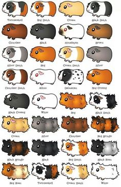 Guinea Pigs. I think Santa may have to bring us one
