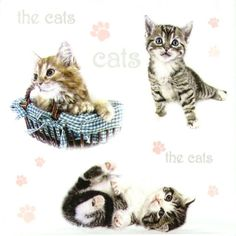 4 x Single Luxury Paper Napkins for Decoupage and Craft  The Cats