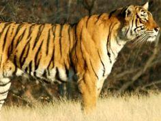 Saranda Forest - in Singhbum, Jharkhand, India