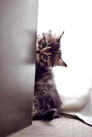 peek-a-mew ^..^