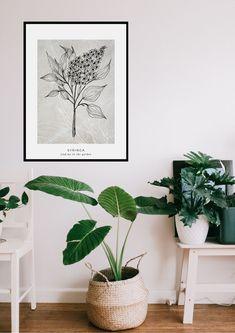 Syringa-posters | KOHTEESSA.   #botanicalart #artposter #wallpapers #designfromfinland #keyflag #ecofriendly #paperproducts #scandinavianposters #nordicdesign #homedetails #interiordesing #webshop #kodinsisustaminen #juliste #julisteet #kasvijuliste #taide #taidejuliste #kotimainen #ekologinen #verkkokauppa #avainlippu #sisustus #sisustaminen #olohuoneensisustus #graafinensuunnittelu #skandinaavinenkoti #kodinsisustus #sisustaminen #sisustusidea #sisustusinspiraatio Interior Desing, Picsart, Indoor Plants, Furniture Design, Eco Friendly, Sweet Home, Design Inspiration, Poster, Deco