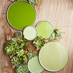 "The yellow-green shade seen in succulents are more lively than their mint or sage counterparts. ""Succulent greens are very fresh, inviting, and springlike. Even the palest hue still has a happy kick to it,"" designer John Loecke says.   Love these colors? Click here to get the paint color names./"