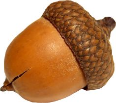 This high quality free PNG image without any background is about acorn, oak, crop and mast. Hd Photos, Baby Photos, Vine Drawing, Drawing Board, Photo Clipart, Acorn And Oak, Png Photo, Free Pictures, Rabbits