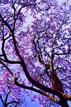Cute Backgrounds For Phones Floral Beautiful Flowers Wallpapers, Beautiful Nature Wallpaper, Pretty Wallpapers, Beautiful Landscapes, Cute Backgrounds For Phones, Cute Wallpaper Backgrounds, Colorful Wallpaper, Flower Background Wallpaper, Flower Phone Wallpaper
