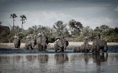 Abu Camp, Botswana ! http://flightsafrica12.blogspot.com/2015/08/plane-tickets-africa.html