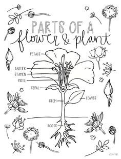 Parts of a plant   Science lessons and worksheets for children further  likewise Types Of Leaves Worksheet Lost among the leaves   Leaf Science for besides Structure of a Leaf   YouTube moreover Identifying Leaves Worksheet   identifying  leaves  worksheet moreover Thunderbolt Kids as well Lines of Symmetry further Top 20 Free Printable Leaf Coloring Pages Online as well Leaf Shapes   ideas   Pinterest   Science  Education and together with Parts of a plant   a tree lesson plan   worksheet by in addition  furthermore leaf  natural shapes and arrangements   Kids   Britannica Kids as well worksheet  Different Types Of Leaves Worksheet  Carlos Lomas likewise Fall Leaf Pre Printables additionally science tips together with Course  Environmental Science   Grade 4  Topic  Plant Life. on different types of leaves worksheet
