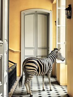 Deyrolle Zebra Composition This is a great shop in Paris. They have thousands of butterfly specimines and insects as well as taxidermy. And it was in Midnight in Paris! Cabinet Of Curiosities, Exotic Flowers, Restoration Hardware, Contemporary Artists, House Design, Inspiration, Black And White, Yellow Black, Furniture
