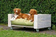 Resultado de imagen para juguetes para perros grandes caseros