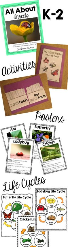 Insect Unit for kindergarten through second grade! Great for insect research! Lots of insect interactive activities!