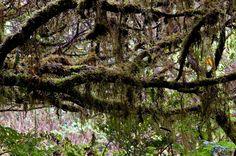 SIARAM :: Florestas Naturais