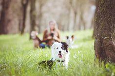 Mariiana Capela photographer Portugal Dog photography Border Collie