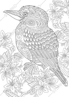 Australian Kingfisher. Coloring Pages. Animal Coloring Book Pages For  Adults. Instant Download Print