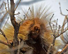 Prickly Friend. Summit County, Utah.