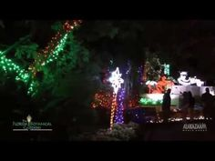 Holiday Lights in the Gardens   Visit St Petersburg Clearwater Florida