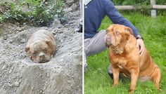 Dog Who Was Buried Alive Finds Happiness With A New Family
