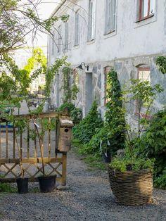 Mandelmanns Trädgård, Simrishamn. Foto Cecilia Romare