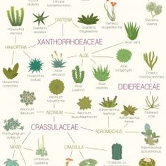 A Visual Compendium of Succulents | Visual.ly