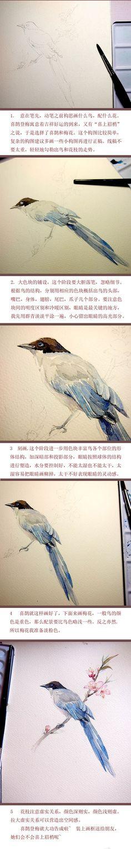 【手绘水彩花鸟教程】