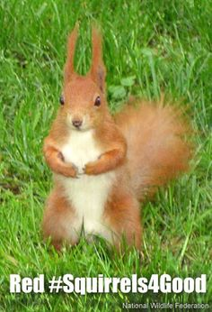 Red #Squirrels4Good