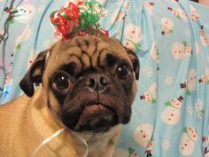 christmas ribbon hat