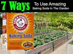 Baking soda is a vital part of green cleaning and has so many uses in the house, but what about the garden. Here are 7 ways to use it in the garden. 1. Make a Non-Toxic Fungicide Mix 4 teaspoons of baking soda and 1 gallon of water. Use on roses for black spot fungus and also on grapes and vines...