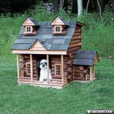 """Being """"in the dog house"""" isn't always a bad thing (12 Photos) 
