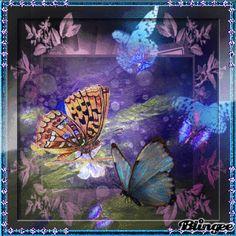 Butterflys Challeng