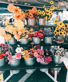 I love Flowers! May Flowers, Flowers Nature, Wild Flowers, Beautiful Flowers, Colorful Flowers, Vibrant Colors, Plants Are Friends, No Rain, Flower Aesthetic