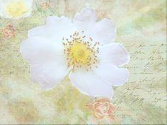 Strukturfoto: Durch die wilde Rose