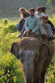 La photo du 15 octobre 2021 du site unoeilsurlaterre.com Jodhpur, Photos Du, Elephant, Creatures, World, Travel, Animals, India Trip, Asia