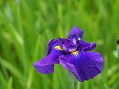 www.BancodeImagenesGratuitas.com+-Flores-29.jpg (1600×1200)