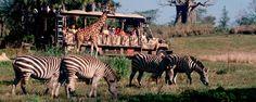Kilimanjaro Safari - Disney's Animal Kingdom for Adults