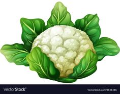 Cauliflower PNG Clip Art in category Vegetables PNG / Clipart - Transparent PNG pictures and vector rasterized Clip art images. Watercolor Fruit, Fruit Painting, Clipart, Flower Drawing Tutorials, Leaf Illustration, Object Drawing, Leaves Vector, Banner Printing, Food Illustrations
