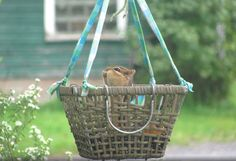 Hang a basket in your yard and fill it with nuts for your squirrels! #DIY Basket Squirrel Feeder - PetDIYs.com