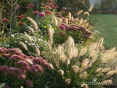 Kolorowy ogród na piasku - strona 104 - Forum ogrodnicze - Ogrodowisko