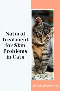 Healing Gel for Cats. All natural, organic skin care gel for cats. Created by holistic veterinarian, Dr. Deneen Fasano. Healing herbal skin gel for cats made with safe, all natural ingredients. Pure organically-grown aloe vera gel, Chinese herbal concentrate, organic lavender oil and organic neem oil. This is a non-greasy gel.