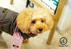 Doggie Do!! / good dog and hello cat !!の画像|エキサイトブログ (blog)