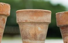 How to Age a Terra Cotta Pot