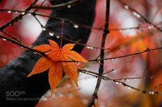 After Autumn Rain by jinsupark9