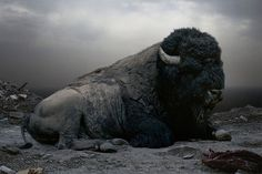 Black and white photograph of a huge bison.  (Simen Johan's Photography)