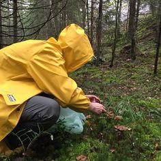 Sieniretkellä 😊 #nuuksionationalpark #hirvikärpänen #suppilovahvero
