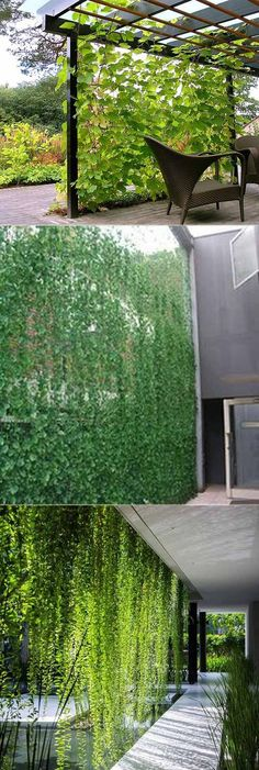Vine privacy screen can make your patio or yard get privacy while adding extra green. #backyardprivacy