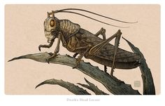 Death's Head Locust by Johnny Stingray