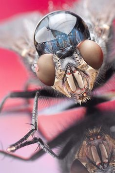 Macro Life: Photos by Dmitriy Yoav Reinshtein | Inspiration Grid | Design Inspiration