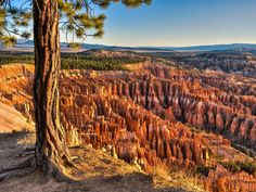 Spend four magical days exploring the cascading sand dunes, vibrant pine forests, and sunset-red deserts of Utah's national parks.  The Destination It's easy to lose yourself in the mighty cliffs and colo...