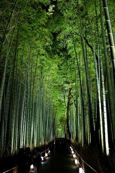 This would make an interesting walk way... Maybe a fence...  (Arashiyama-Hanatouro:Lantern festival, Bamboo path, Kyoto, Japan)
