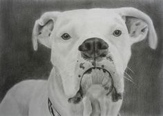 Custom Pet Portrait - Drawing From Photograph