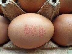 Formiga Amiga: O bilhete de identidade dos ovos
