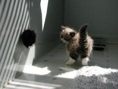 My bid for cutest kitten of all time... Meet Zora.